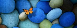 6954880-butterfly-on-blue-stone_wide