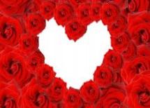 roses10